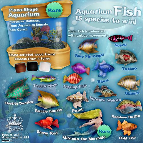 Yummy-Aquarium Fish